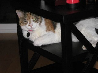 Abby in table, pt. 1