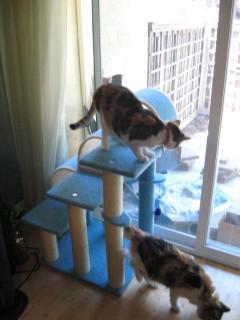 Kitty condo pt. 2