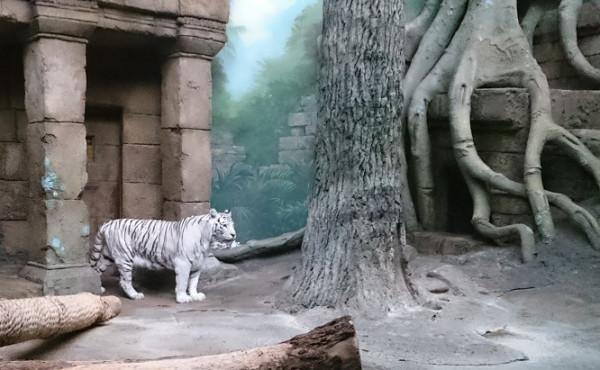 Тигрица 1