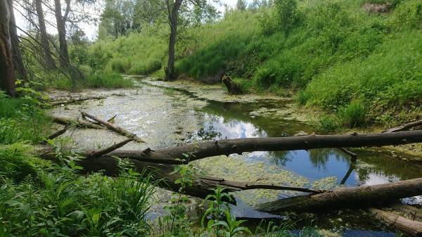 Бобровый ручей
