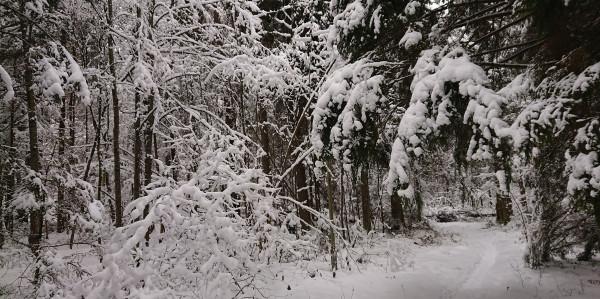 Снежный лес max