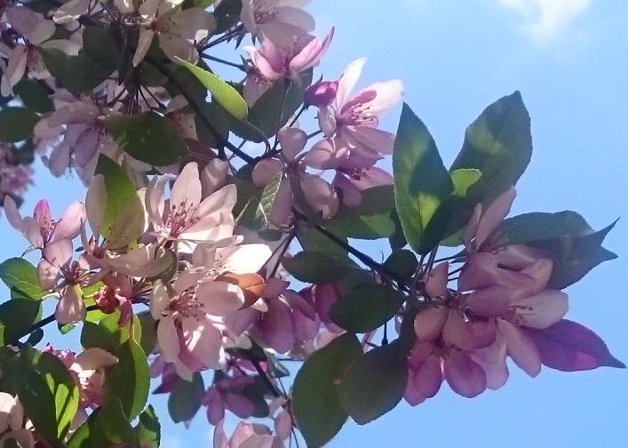 Розовое 2