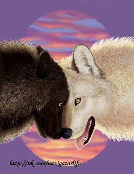 Какой волк победит?