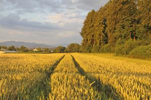 Природа, дорога, село