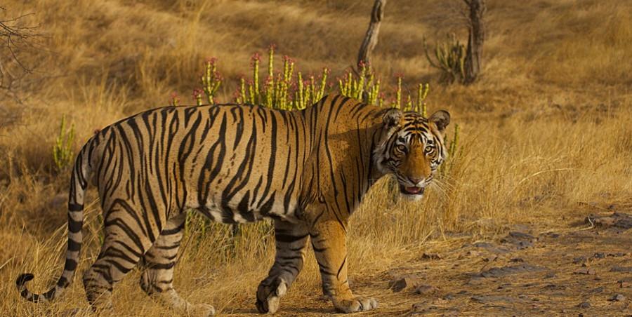 wild life tours in India