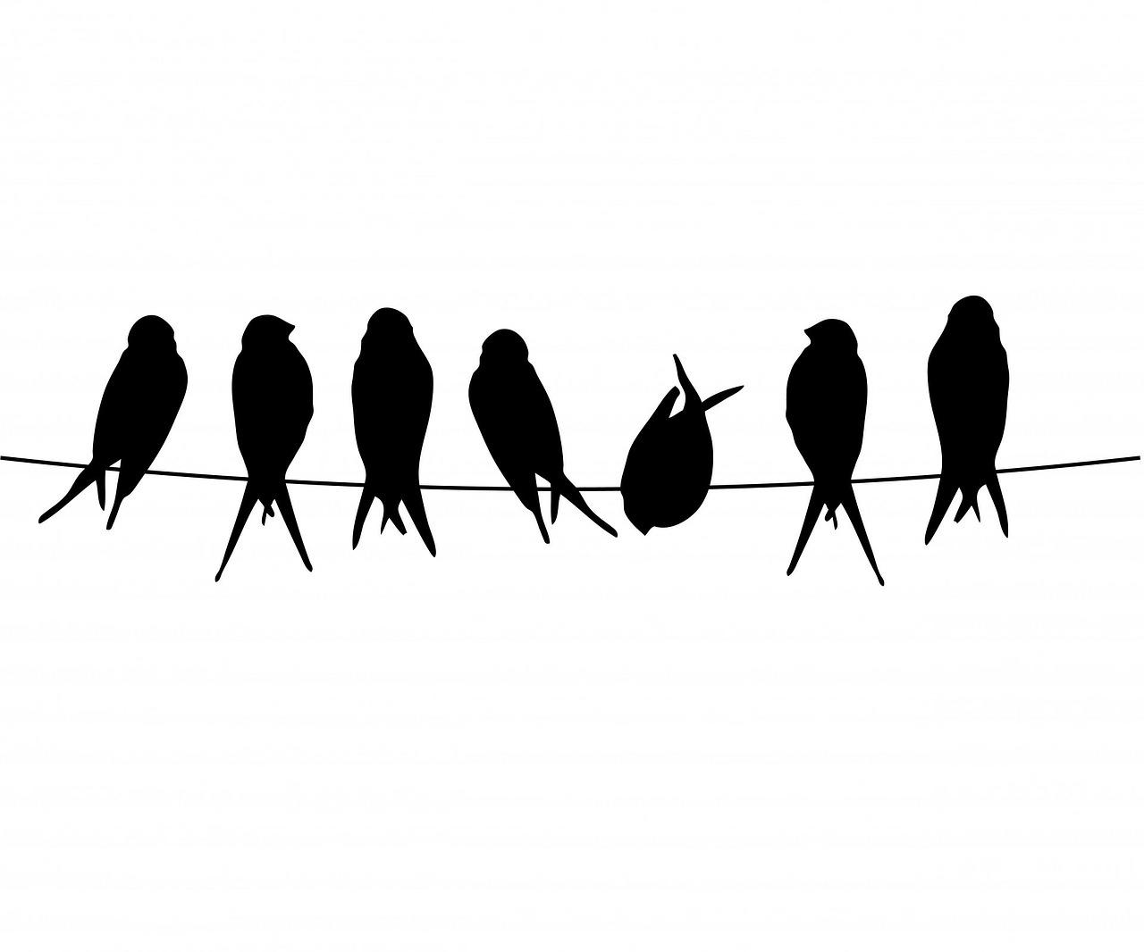 bird-220327_1280