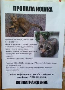 Пропала кошка (кот) Благотворительная картотека