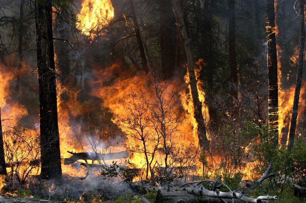 воздействию подвергаются фото лесного пожара в россии это светлое пятно