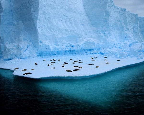 0507_antarctida