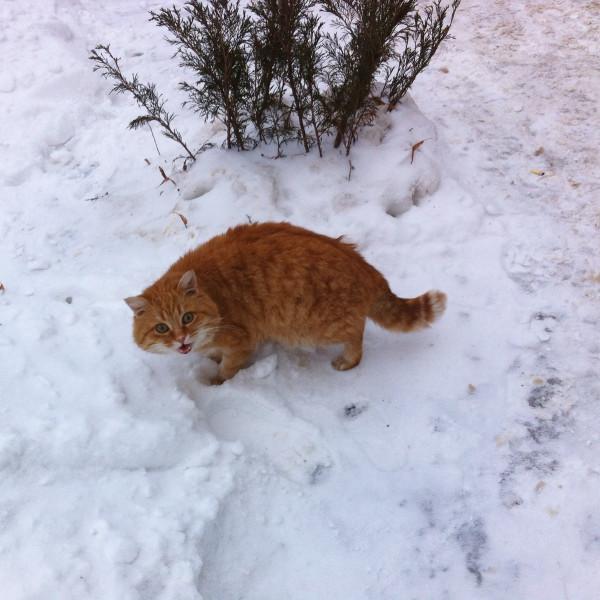 жж-елец-коты