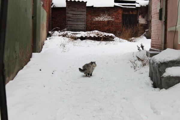 жж-елец-коты2