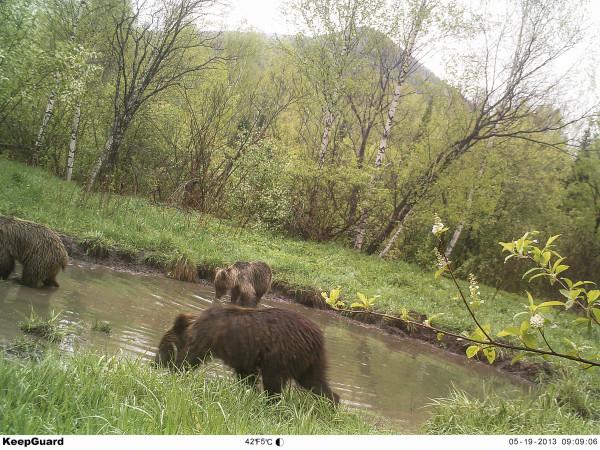 20130519-медведица с медвежатами (1)