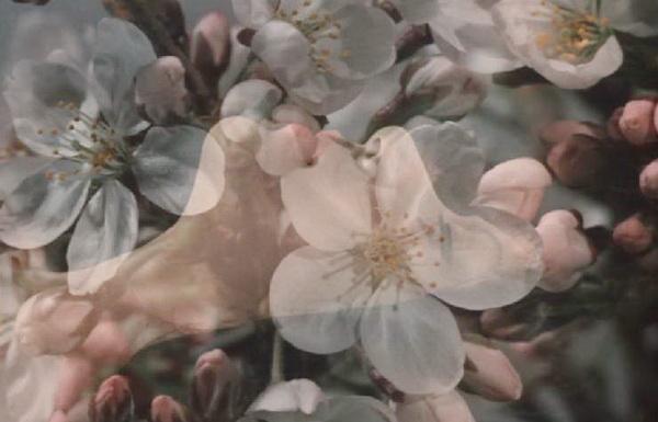 1975 - Под сенью цветущих вишен.JPG