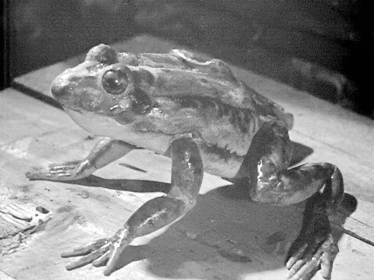 1939 - Василиса Прекрасная (Александр Роу).jpg