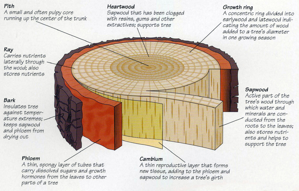 3 examples for consideration | place branding of public ... structure diagram of animal cell wood structure diagram