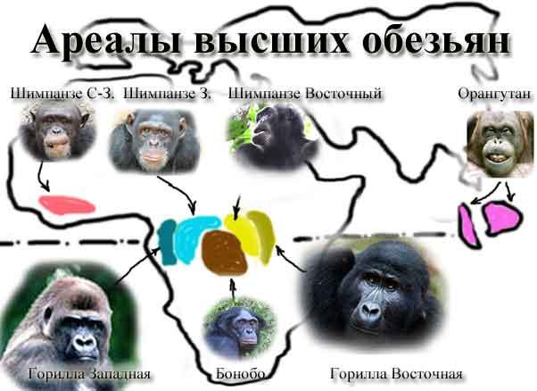 Ареалы высших обезьян