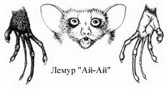 lemur_5
