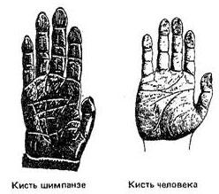 Безымянный палец и член