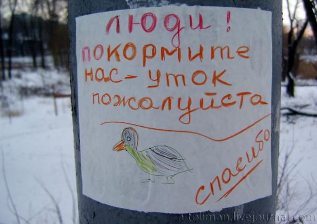 утки Донецк Свет счастливой звезды http://altoliman.livejournal.com/