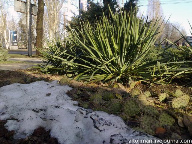 фотографии Донецк зима Свет счастливой звезды http://altoliman.livejournal.com/