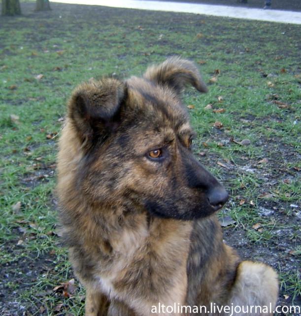 собака - кусака Донецк Божена Рынска Свет счастливой звезды http://altoliman.livejournal.com/