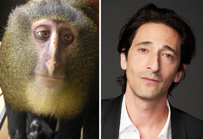celebrity-look-alikes-animals-40__700