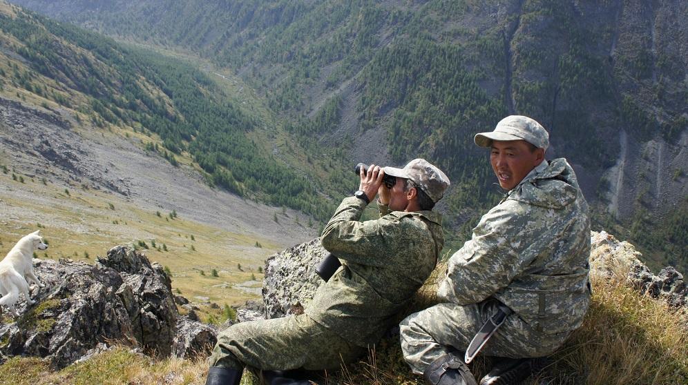 Наблюдаем стадо горных козлов