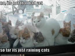 rainingcats