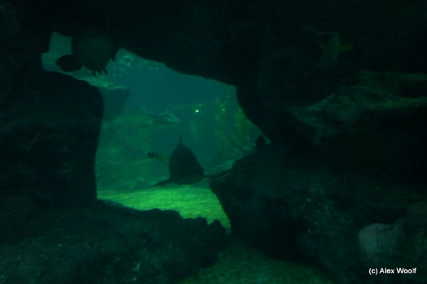Акулы подкрадываются