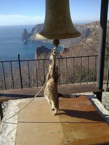cat&bell