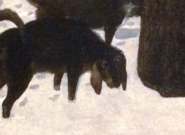 01_Взгляд собаки.JPG
