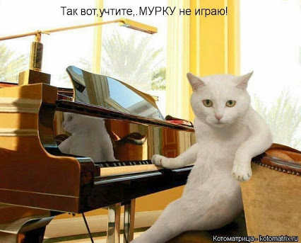 111718079_large_kotomatritsa_eb