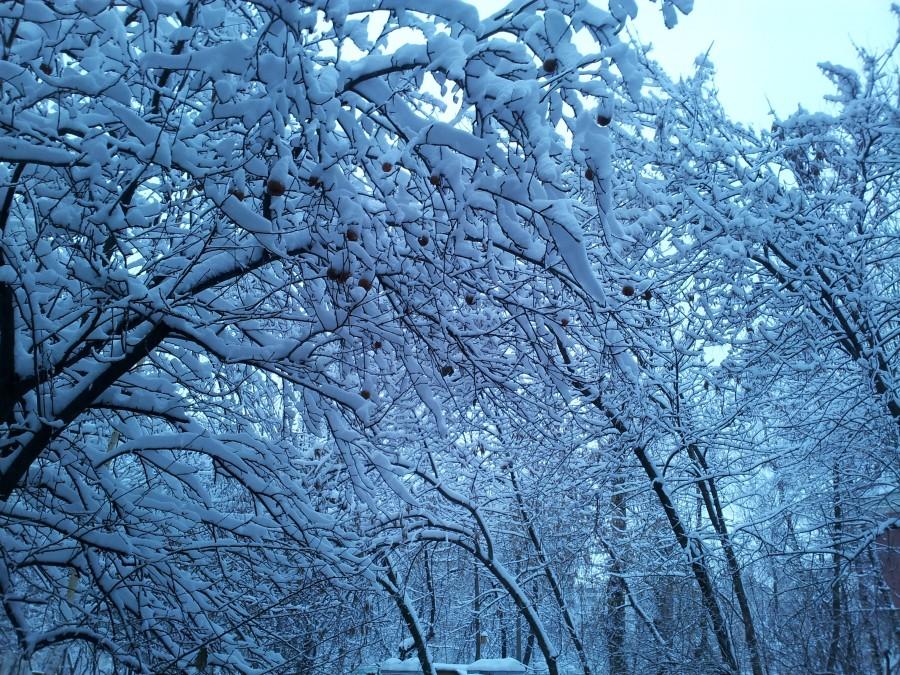 Яблоки_в_снегу