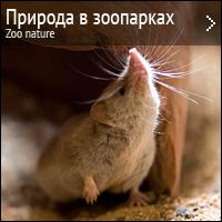 Природа в зоопарках