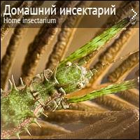 Домашний инсектарий