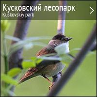 Природа кусковского парка