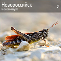 Природа Новороссийска