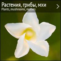 Растения, цветы