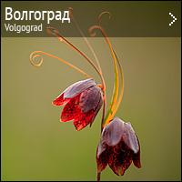 Природа Волгограда