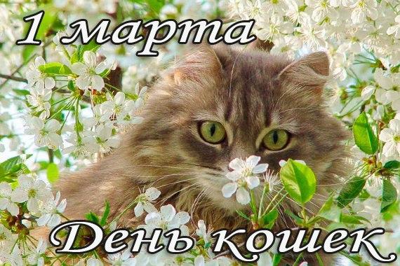 день кошек 3.jpg
