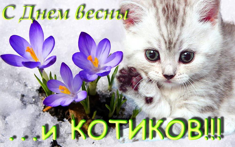 день  кошек 6.jpg