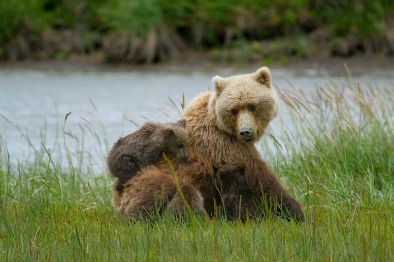 Служба национальных парков США