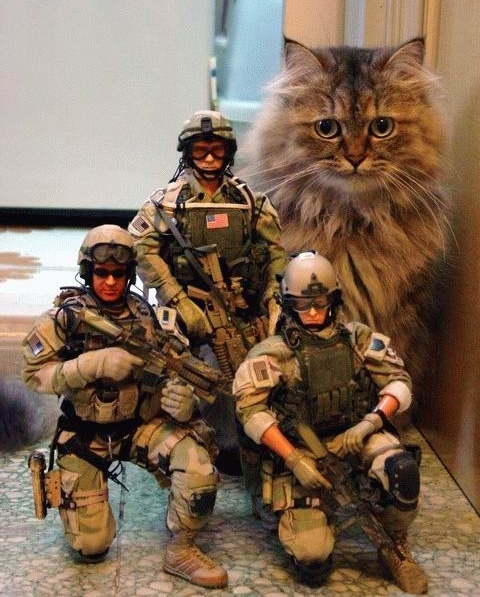 us_troops_and_cat