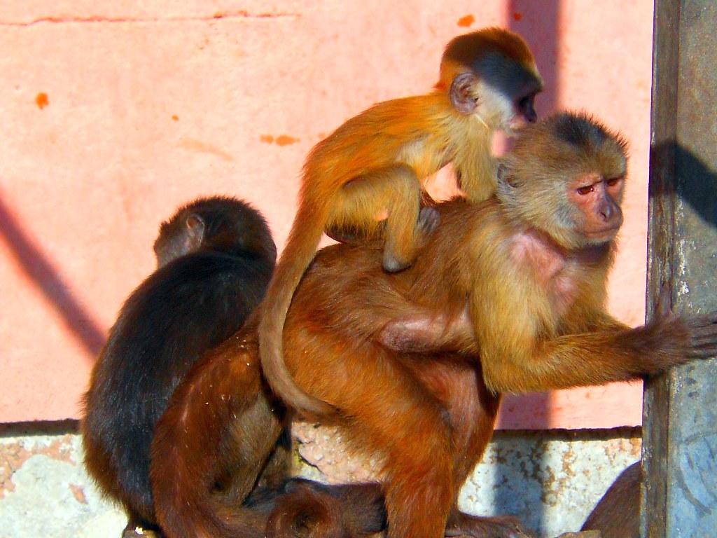 обезьяна5.jpg