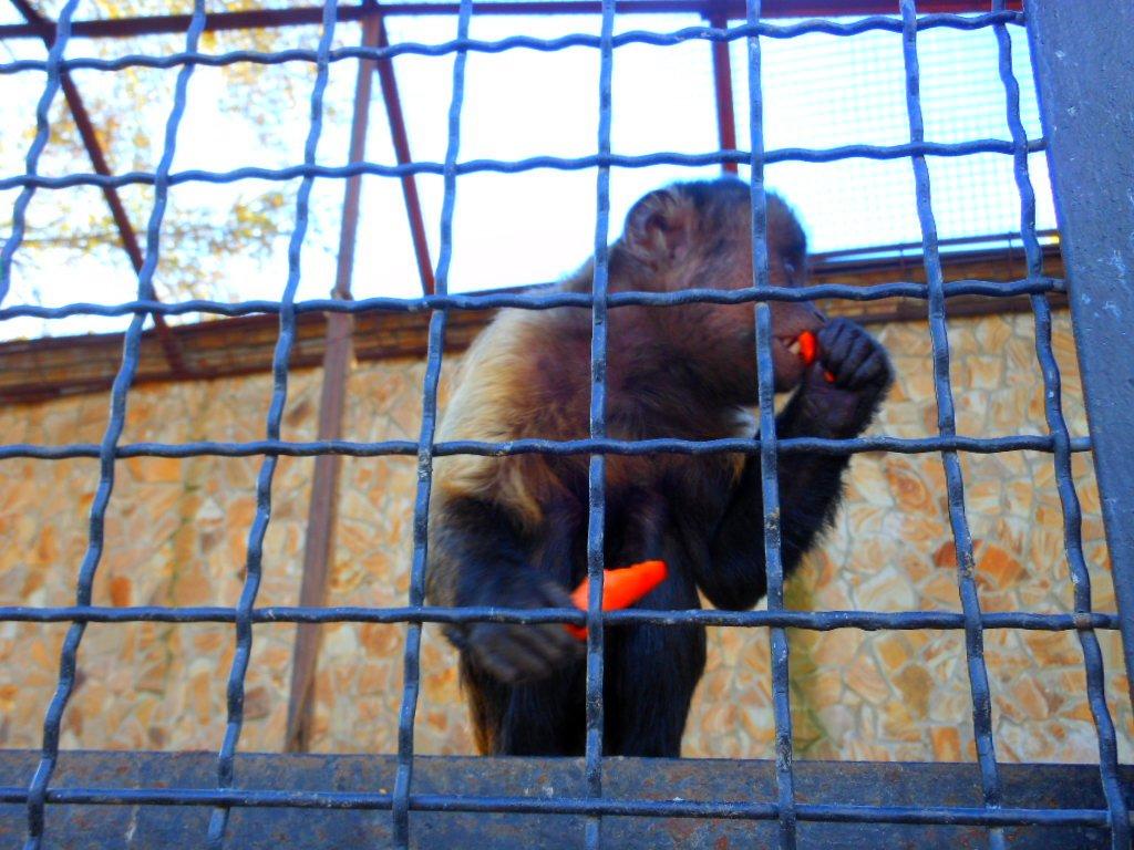 обезьяна11.jpg