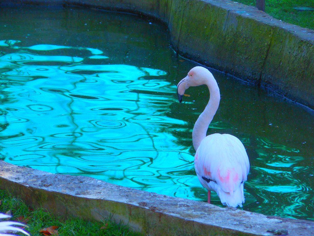 фламинго2.jpg