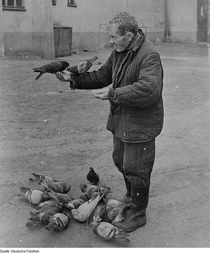 Fotothek_df_ps_0000630_002_Tiere_^_Vögel_^_Tauben_^_Fütternde