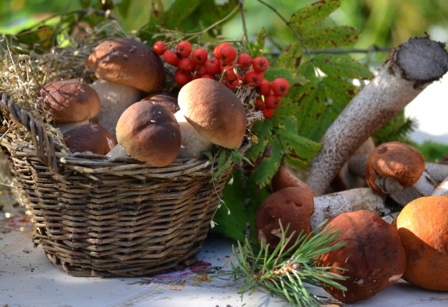 Mushrooms_nature_Berry_438128