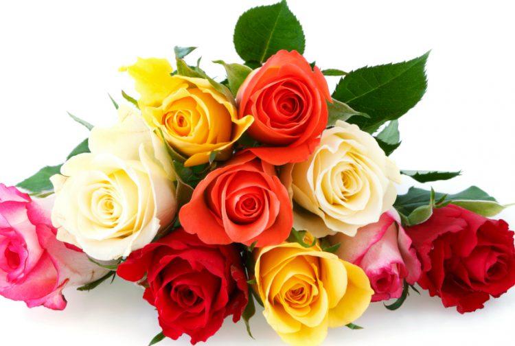 54ff70287538f-1-colorful-roses-xln-750x504.jpg