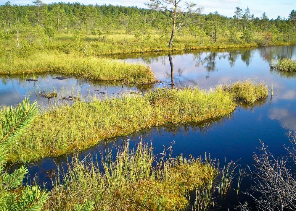 Берендеево болото картинки